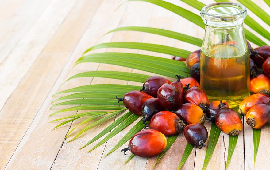 Palmino ulje u ishrani - Karakteristike, upotreba, beneficije